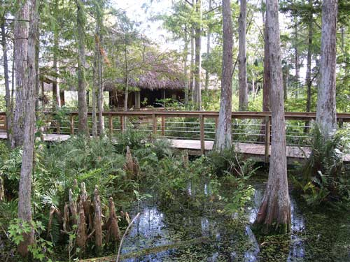 how to build on a wetland