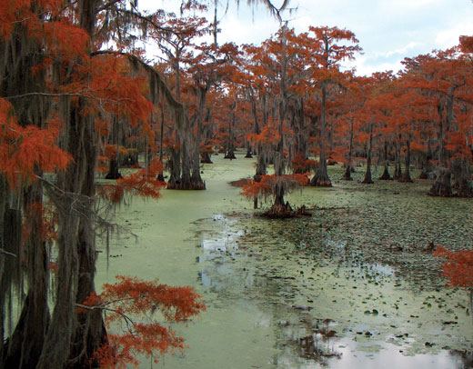 Features Vol 52 No 5 Fighting For Caddo Lake Land